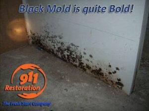 911 Restoration - mold removal -New Market black mold